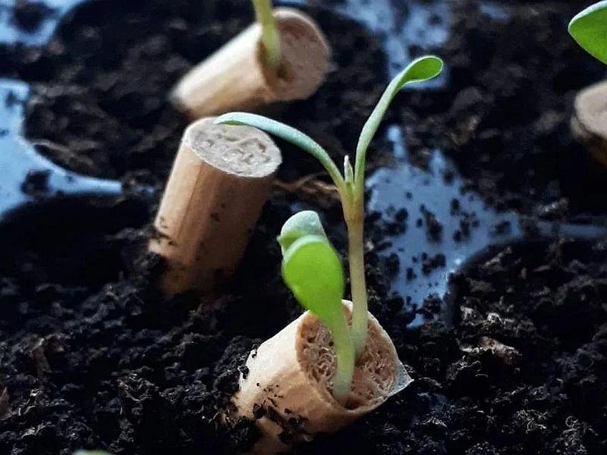filteri sa semenom biljaka