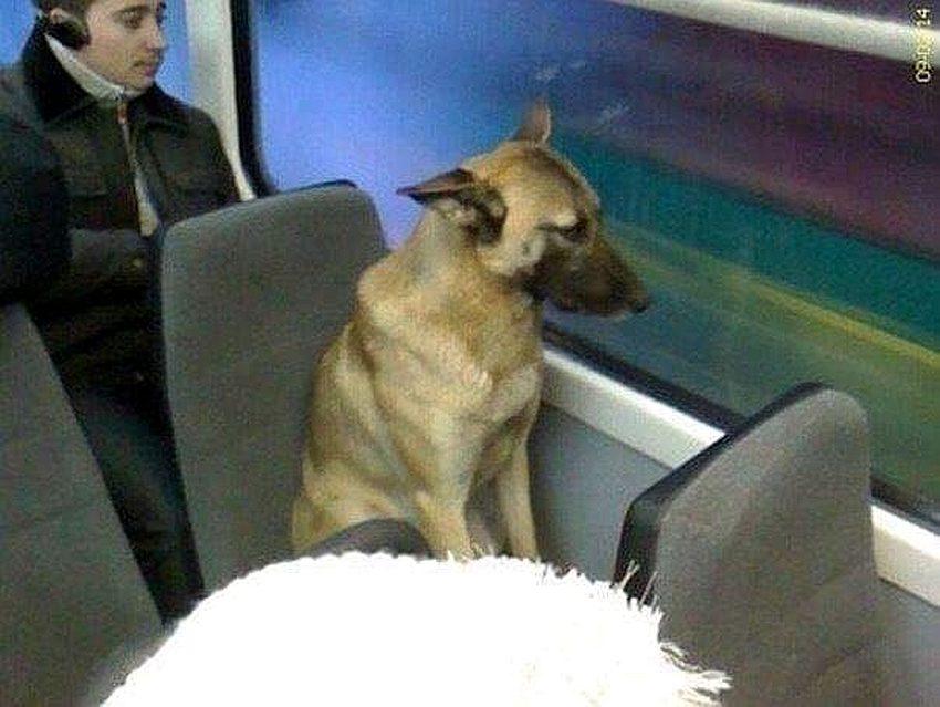 pas u tramvaju