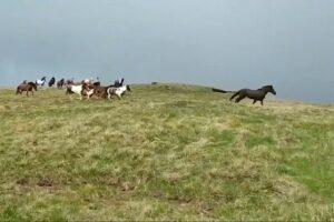 stara planina wild horses
