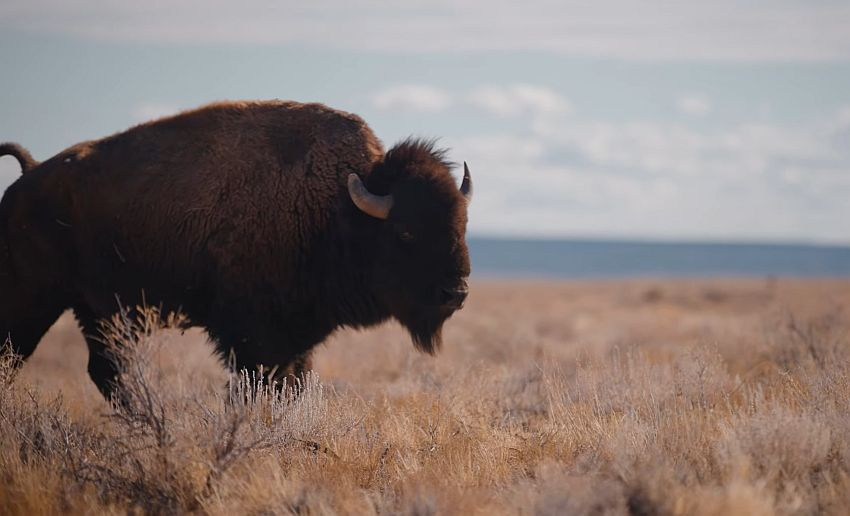 bizoni arizona