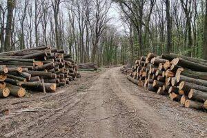seča šume