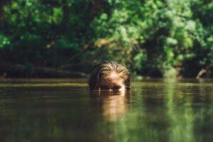 horoskop-jun-devojka-jezero