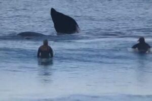 mama i beba kitovi