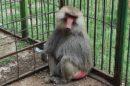 aleksandar vulin majmun