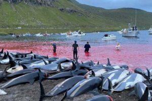 delfini-masakr