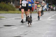 pas-brka-maratonac